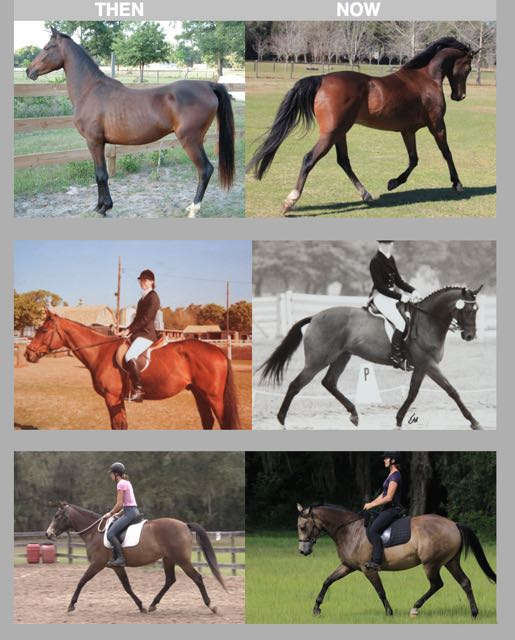 Before and After Dressage Naturally