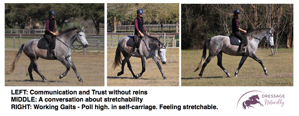 Dressage Naturally Working Gaits