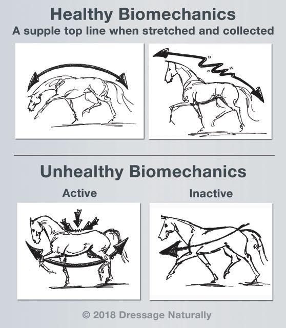 Healthy_Unhealthy_Biomechanics_web