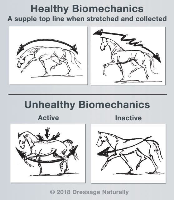 Healthy_Unhealthy_Biomechanics_web