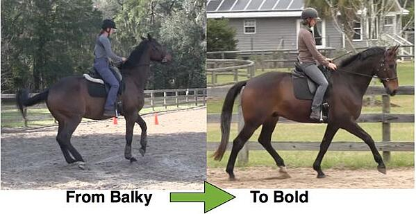 Karen Rohlf Dressage Naturally From Balky To Bold