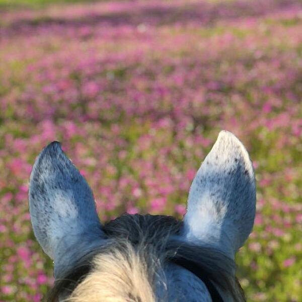 Natilla's ears and flowers