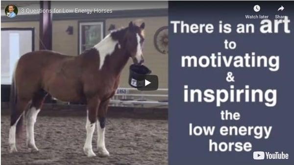 low energy horse