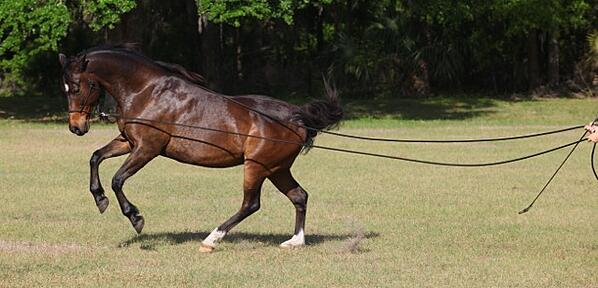 atomic canter online
