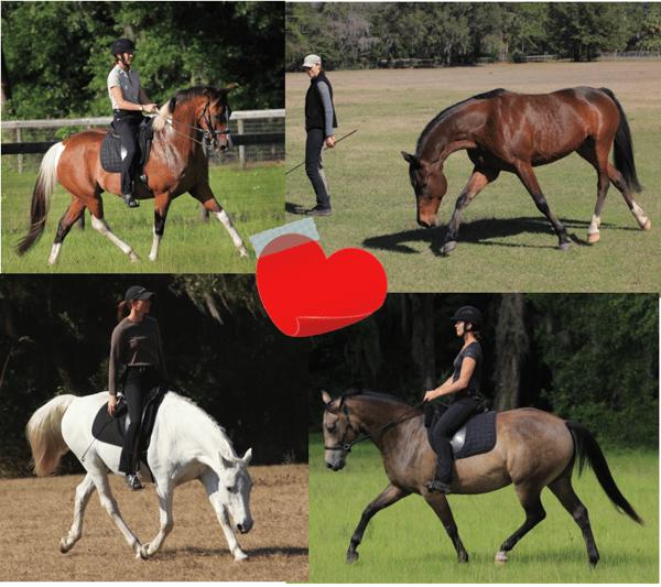 Horse play at dressage naturally