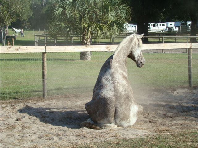 Huey Sitting